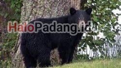 Pencari Petai di Sijunjung Dikejar Beruang, Lalu Dicakar. Kondisi Parah, Dirujuk ke RS M Jamil 5