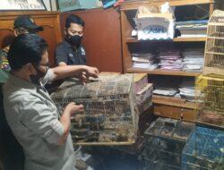 Jual Burung yang Dilindungi, Polisi Amankan Penjual Burung di Agam